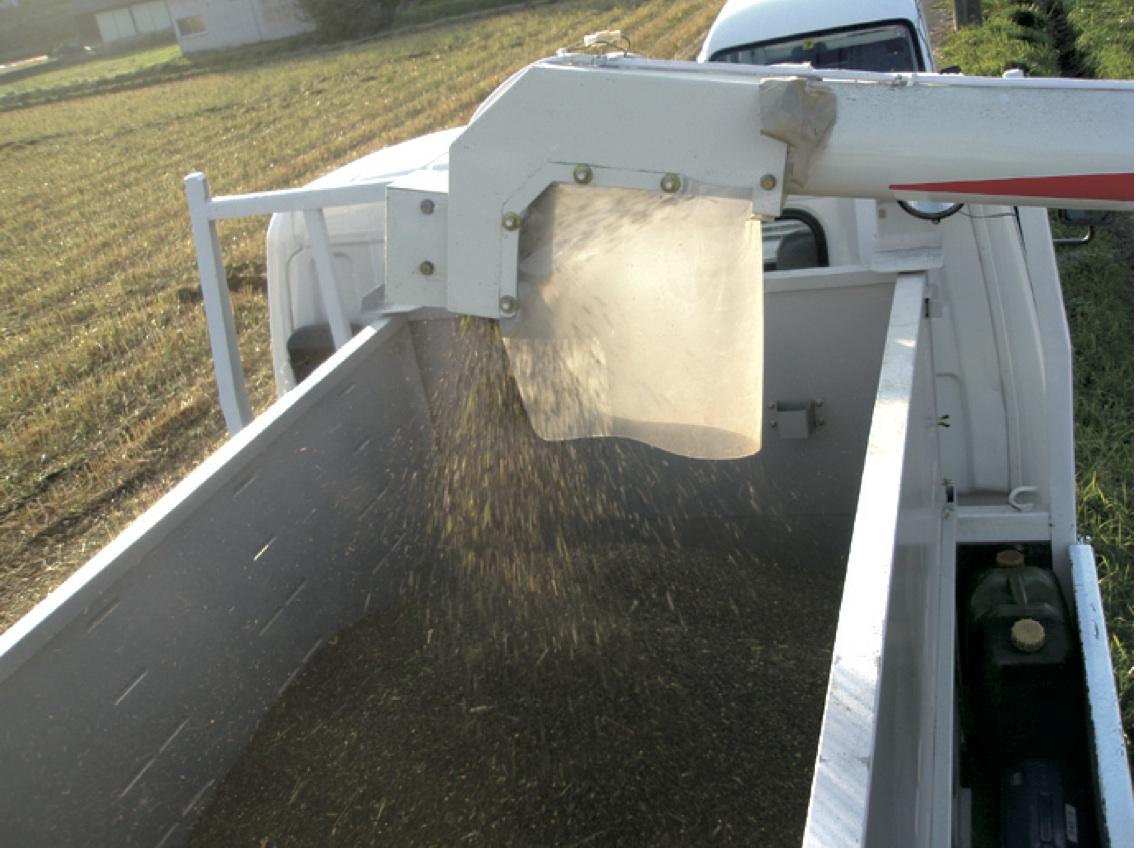 採りたて -新そばの季節には採りたてのそば粉でそばを打ちます