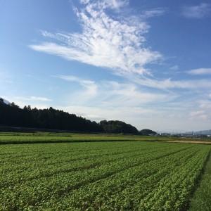 そば畑(2014年9月9日撮影)