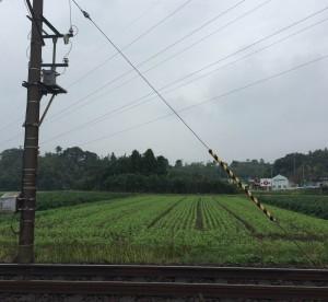 いなべ市大安町片樋のそば畑 (2014年10月5日撮影)
