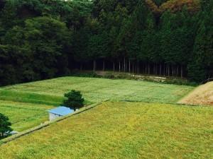 いなべ市北勢町南中津原のそば畑 (2014年10月23日撮影)
