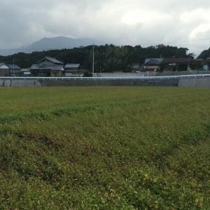 いなべ市北勢町西貝戸のそば畑 (2014年10月27日撮影)