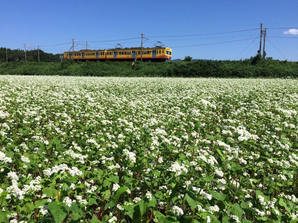 三岐鉄道三岐線とそば畑 2015年9月20日
