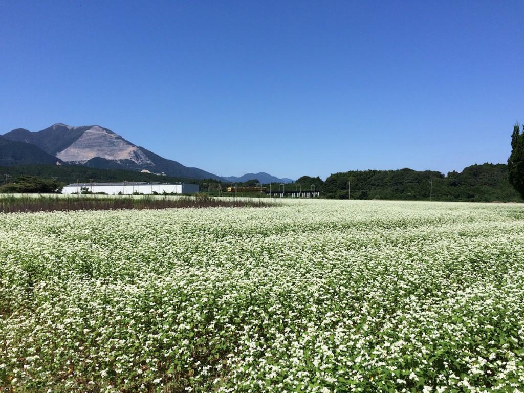 藤原岳とそば畑 2015年9月20日